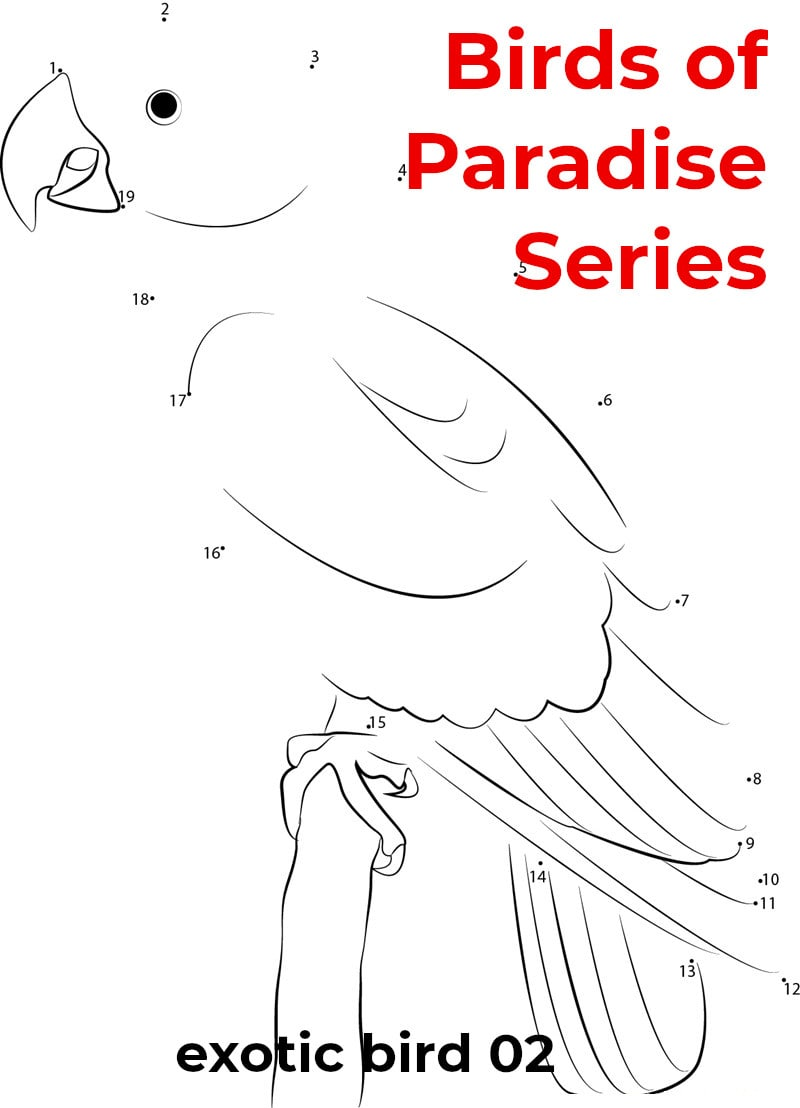 birds of paradise - featured - exotic 2