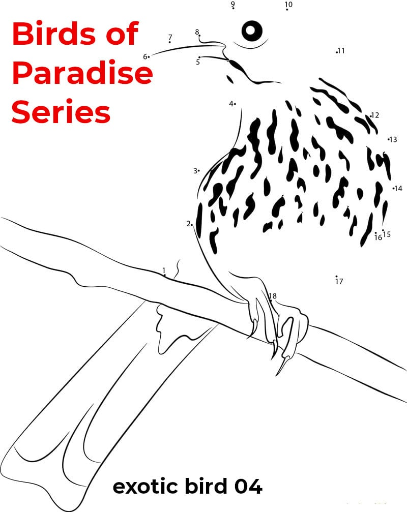 birds of paradise - featured - 04