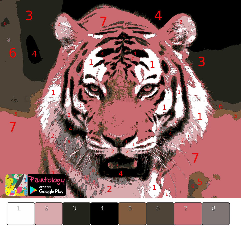 Tiger - PbyNo - featured