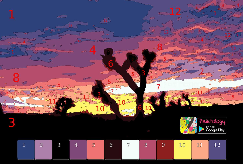 PbyNo - sunset cactus - featured